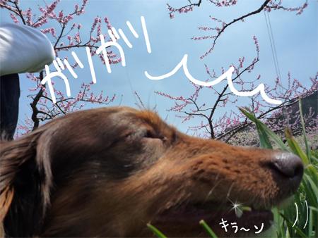 gatsugatsu.jpg