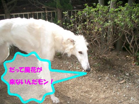 2009.3.12 まりあ 004
