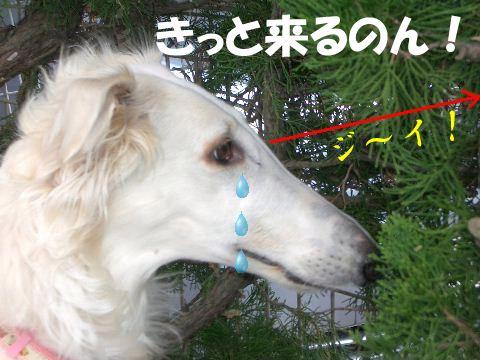 2009.3.12 まりあ 120