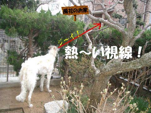 2009.3.12 まりあ 122