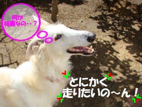 2009.3.15 まりあ&風花 006