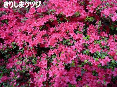p1000438縺阪j縺励∪縺、縺、縺論convert_20090420120742[1] (2)