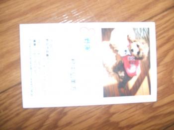 DSCF6984_convert_20090117095013.jpg