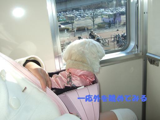 2008_0310ティンク0012