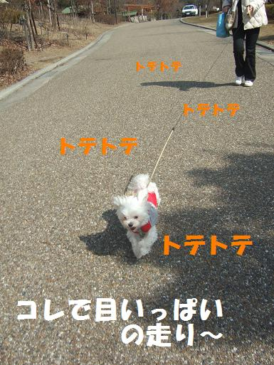 2008_0310ティンク0033