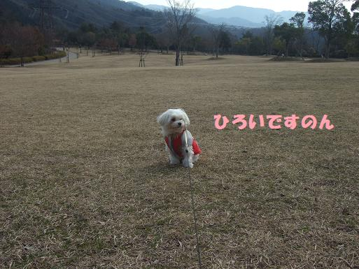 2008_0310ティンク0048
