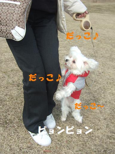 2008_0310ティンク0053