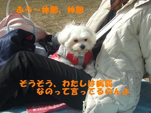 2008_0310ティンク0055