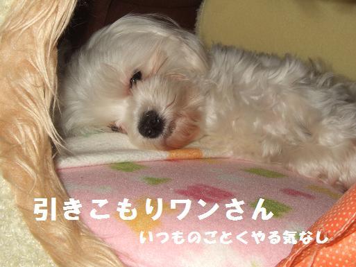 2008_0310.jpg