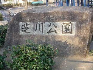 通勤路桜4-10 (7)