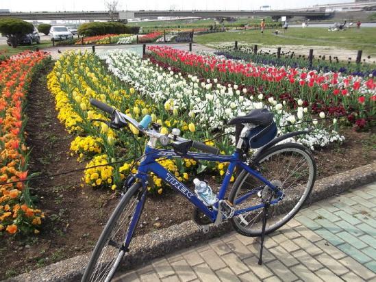 サイクリング4-15 (2)