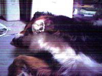 20061211122431.jpg