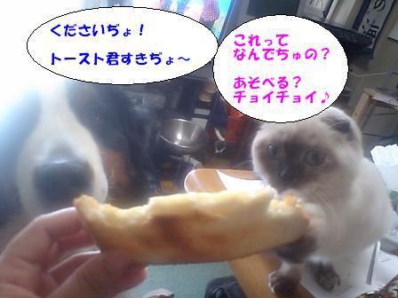 トースト4