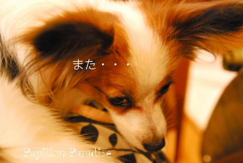 2008092709.jpg
