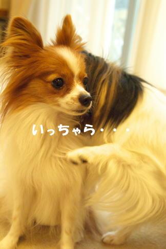 2008110809.jpg
