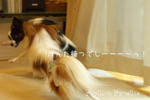 2008110811.jpg