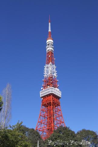2009010201.jpg