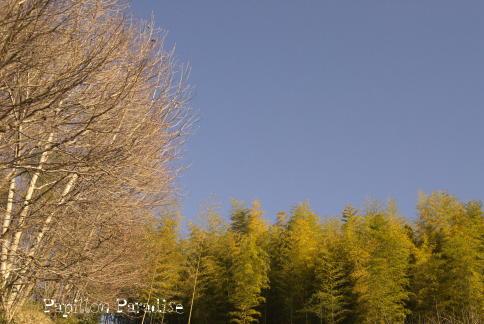 2009010305.jpg