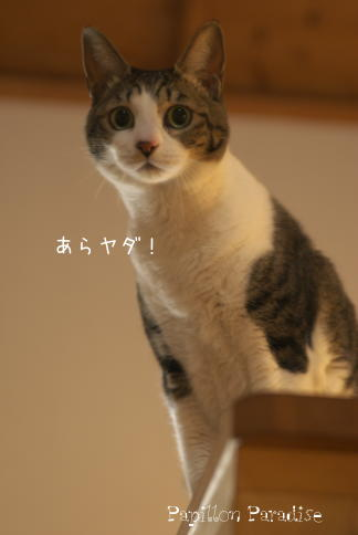 2009011208.jpg