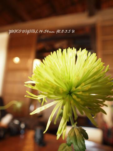 2009011710_14.jpg