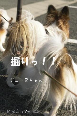 2009020703.jpg