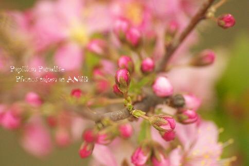 70-300_2009032714.jpg