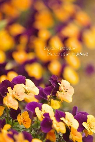 70-300_2009032721.jpg