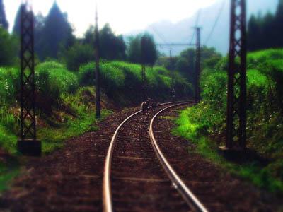 線路と親子のカモシカ