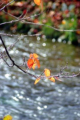紅葉の桜といたち川
