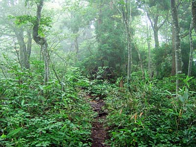 靄と霧の大辻山登山道