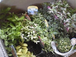 植物モニター