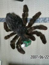 蜘蛛ヌイグルミ。