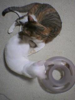 猫マンダラ