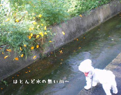雑草と雑種犬