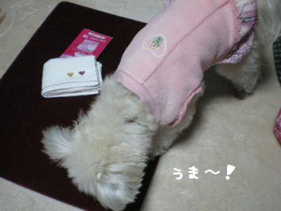 かっ食らう犬
