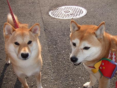 2009_05062009・5・6 アズキ・モモちゃん0030