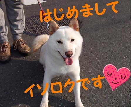 イソちゃん1