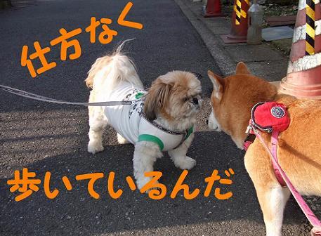 歩くタッチ