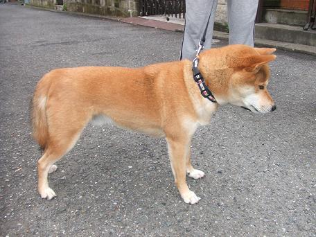2009_06012009・6・1 色々犬仲間0011