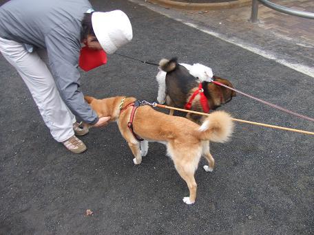 2009_06012009・6・1 色々犬仲間0057
