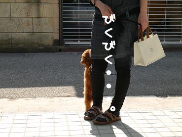 おさんぽデビュー4