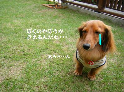 野望抱くほど気が強けりゃいいけど、ただただシッポ丸めて抱っこ犬になってた桃。