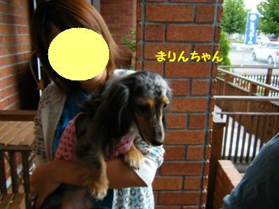 レーチェママさんちのお姉ちゃんに抱っこされる「まりんちゃん」♪