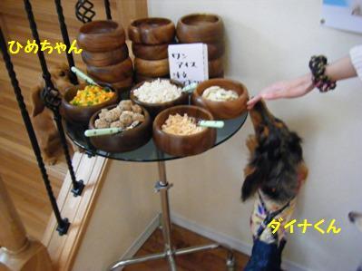 ひめちゃん階段使うなんて!賢い!!