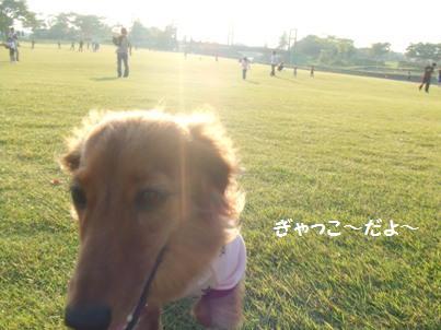 この日は家族連れが多くて芝生で遊ばせてあげれませんでした。誰かまわず吠えちゃうもんで(汗)