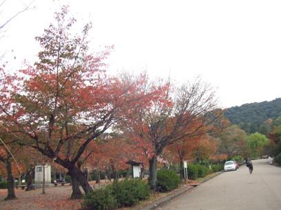 紅葉してる丸山公園