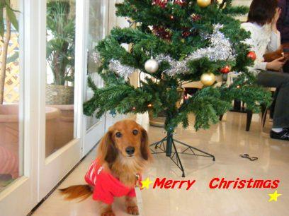 ステキなクリスマスをお過ごし下さいマセ☆ちなみにウチはもうケーキ食べました(笑)