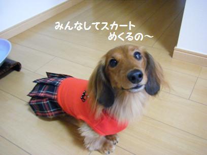 スカートからチョロっと見えるオチリが可愛くて可愛くってぇ~~( ̄▽ ̄*)