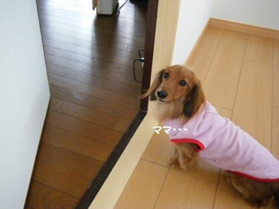 「桃」だけにピンクのお洋服が増えました。いえ、本当は私とオカンの趣味です。