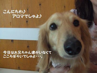 アロちゃんかわえぇ~~( ̄▽ ̄*)